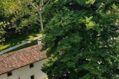 tree climbing padova garda