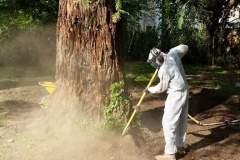 Cure per alberi