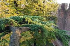Dagli-occhi-di-un-treeclimber-11