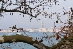 Potatura alberi Venezia