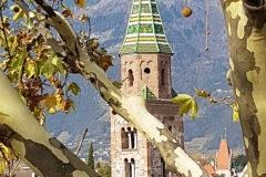 tree climbing verona