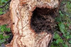 Valutazioni alberi